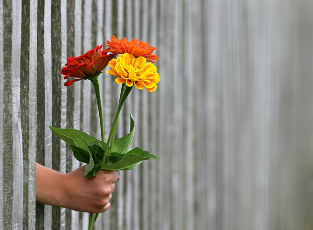 flower in a fence photography ideas